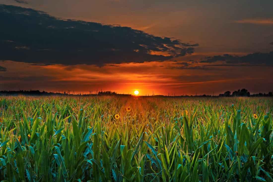 agriculture clouds corn corn field